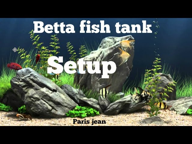 How properly to clean a betta fish tank