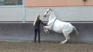 Terre A Terre   Academic Art Of Riding   Classical Riding