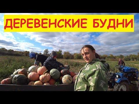 Деревенские будни / ОЧЕНЬ много тыквы / Помидоры лучше не подвязывать
