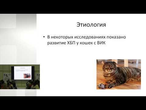 Ольга Сятковская - Инфекции мочевыводящих путей. Антибиотикотерапия урологических патологий кошек.