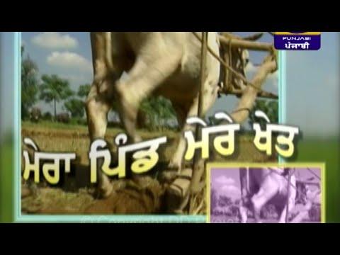 Mera Pind Mere Khet | 15 November 2019 | Latest Show | DD Punjabi