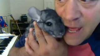 TIKI THE CHINCHILLA SINGS A HAPPY SONG