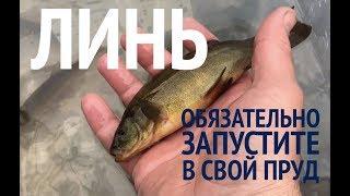 Какая рыба для пруда лучше ловить
