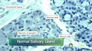 Rabies Diagnosis