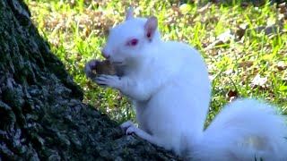 Videos for Cats to Watch,Ultimate Birds,Squirrels Compilation,