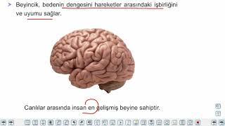 Eğitim Vadisi AYT Felsefe 2.Föy Psikolojinin Temel Süreçleri 1 Konu Anlatım Videoları