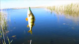 Искусственная приманка для ловли рыбы кузнечик