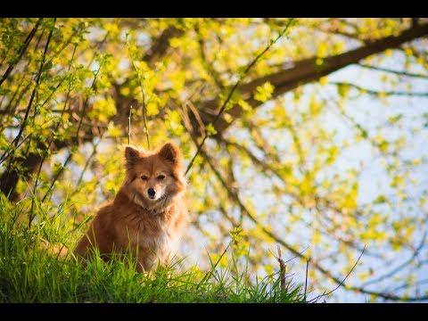 PET SITTING DOG WALKING COURSE - YouTube