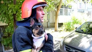 В Николаеве пожарные спасли пса из горящей квартиры