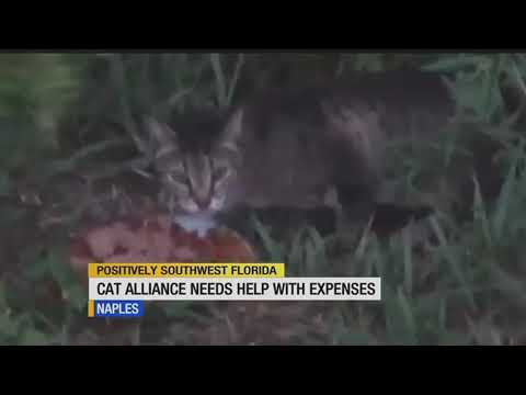 Naples Cat Alliance struggling to stay open
