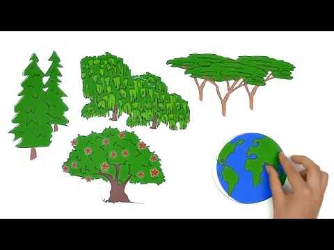 IUFRO - Interligando florestas, ciência e pessoas