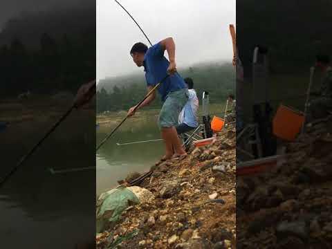 Câu cá rô phi tại đập thủy lợi quá phê