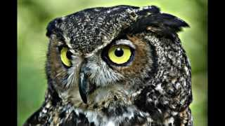 Wise owlpictures - Ən Populyar Videolar
