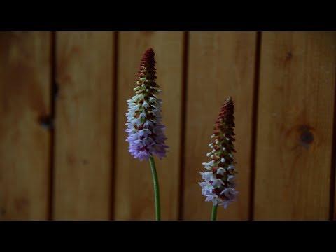 Комнатный цветок.  Мне подарили цветок. Помогите узнать название!?!