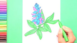 How to draw Bluebonnet - State Flower of Texas
