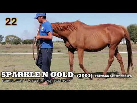 Lote SPARKLE N GOLD (USA)