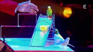 Супер номер - дрессированные попугайчики