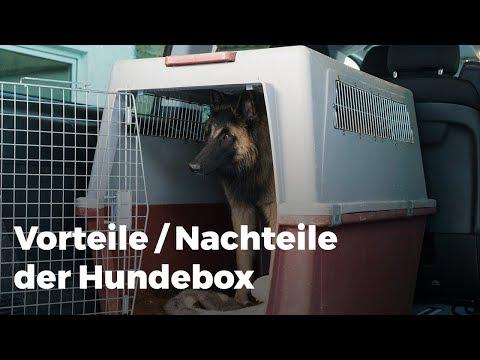 Hundebox - ja oder nein?! Vor und Nachteile der Hundebox! My DogCoach