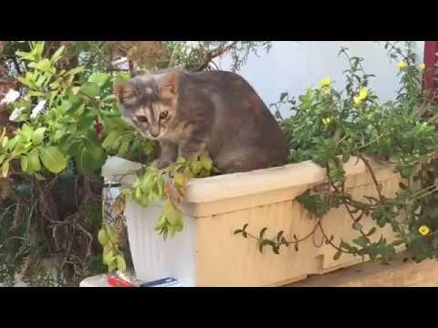 Кошки и собаки в отеле Club Hotel Sera#Турция#кошки#отдых#