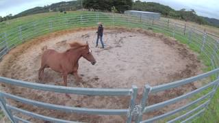 Bringing Horses Back Into Work Step By Step Part 1