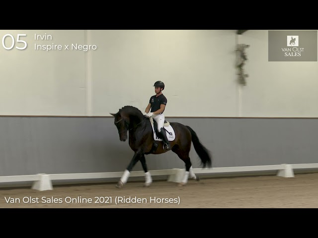 Irvin under saddle