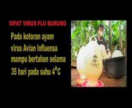Video Flu Burung dan Cara Pencegahannya