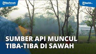 Semburan Api di Sawah Wilayah Indramayu Muncul Sendiri, Ternyata Masih di Sekitar Sumur Bor Belanda