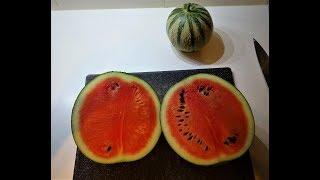 Hoe bepaal je of jou watermeloenen en meloenen rijp zijn.