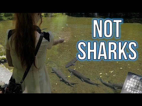 Feeding not sharks like an idiot