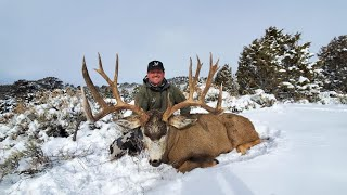 Colorado Giant Mule Deer!
