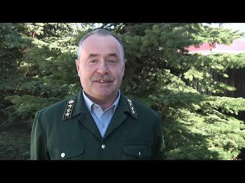 Таксация леса, которую в Караидельском районе ждали более 15 лет - завершена
