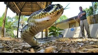 Snakes of Florida: The Good, The Bad & The Friendly