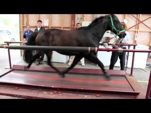 Have You Seen a Horse Run on a Treadmill?