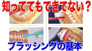 知っててもできてない?歯みがきブラッシングの基本