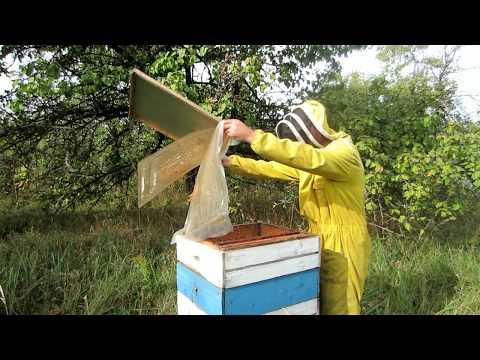 Пчеловодство.Проверка запасов корма у пчёл после кормления сиропом.Подготовка гнезда в зиму.