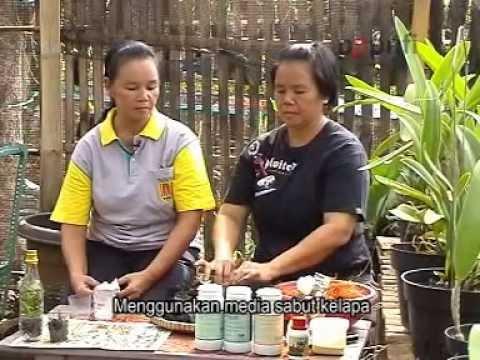 Video Budidaya Anggrek bagian 1