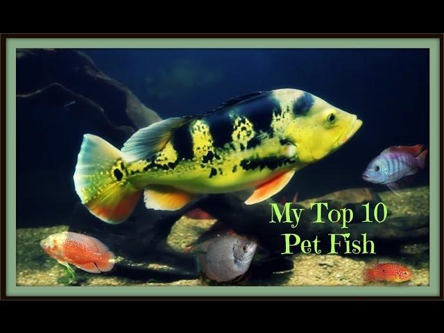 Top 10 Fresh Water Pet Fish
