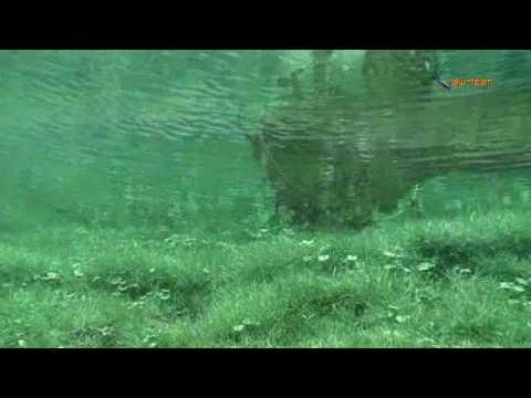Ein Tauchgang am Grünen See, Grüner See,Tragöß,Steiermark,Österreich