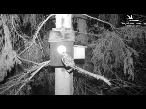 28.02.18 (Weibchen will Maus)