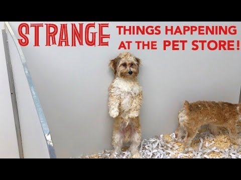 STRANGE PUPPY BEHAVIOR AT PET STORE!