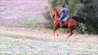 Finca Barroco, VK-Pferd, VAQUERO, TRESANGRE, Wallach, 7 Jahre