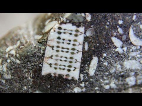 Deze mysterieuze 'microchip' werd ontdekt in een 250 miljoen jaar oude steen