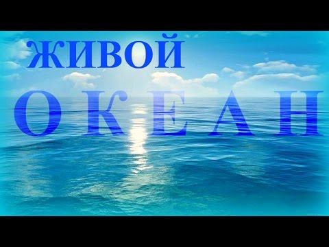 Атлантический Океан для Отдыха / Медитац