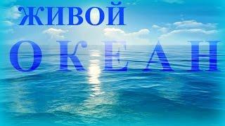 Атлантический Океан для Отдыха  / Медитаций
