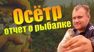 Рыбалка на реке осетр в ясногорске