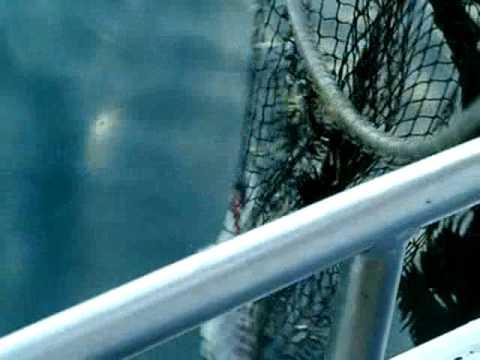 Creatura che pesca