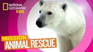 Polar Bears and How to Save Them | Mission Animal Rescue