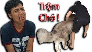 NTN - Gấu Alaska Bị Trộm Bắt Đi Mất (Alaska dog was stolen by thief)