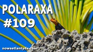 Polaraxa 109 – Koralowy Zamek