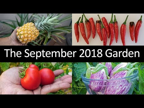 The California Garden In September 2018 - Tour, Gardening Tips & More!